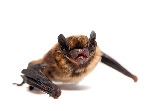 Clermont County Bat Control